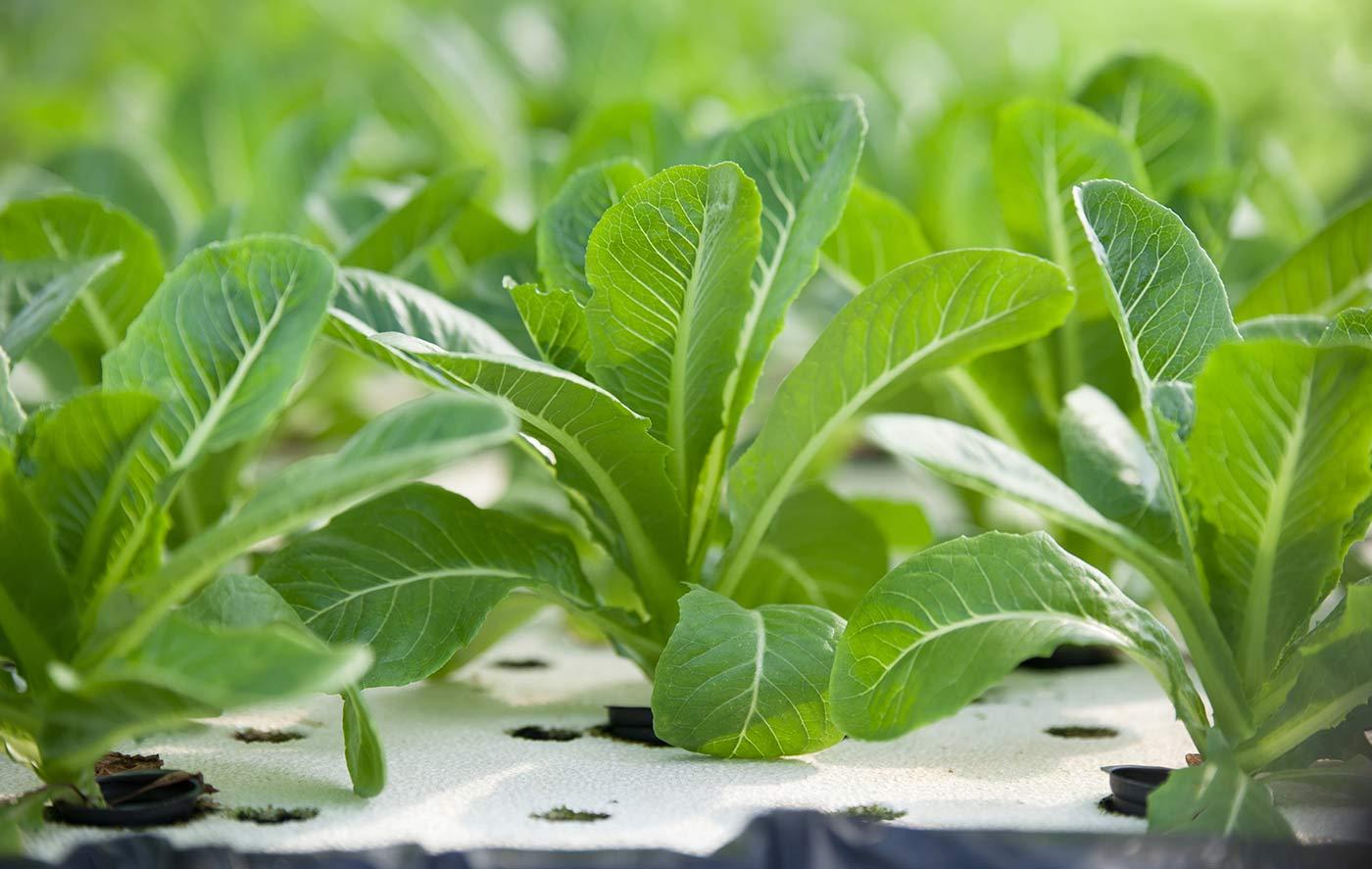 HP01seminiere_polistirolo_piante