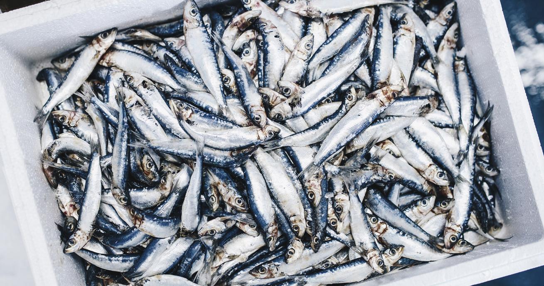 cassetta-pesce-azzurro-in-polistirolo