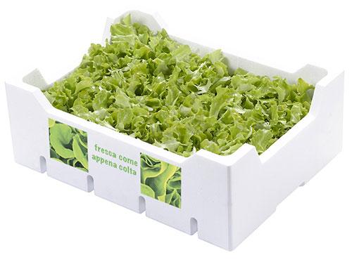 cassetta polistirolo cassa polistirolo per alimenti insalata radicchio Isolconfort