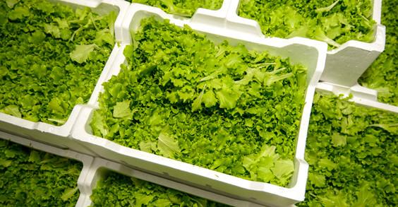 insalata-confezionata-in-contenitori-in-polistirolo-per-alimenti