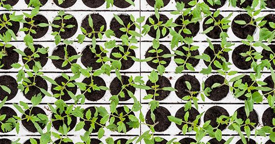 semenzaio in polistirolo per piantine da orto